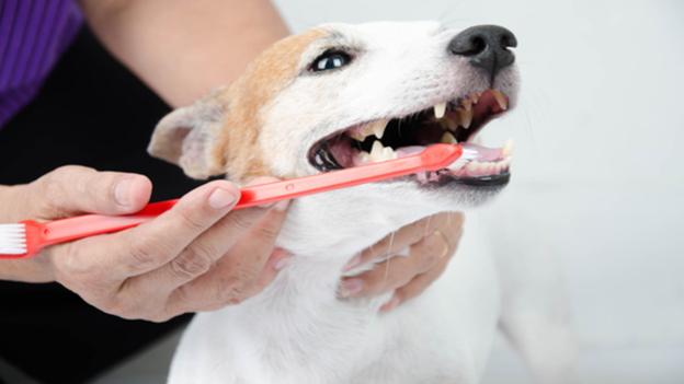 pet dental hygiene tips from premier vet care in rowlett tx